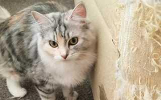 Как отучить кота драть обои и дорогую мебель в доме
